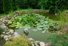 7 steps to planning a garden pond