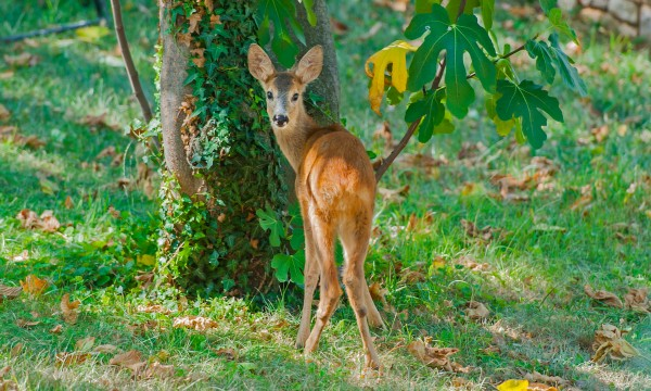 7 Tactics For Keeping Deer Out Of Your Garden