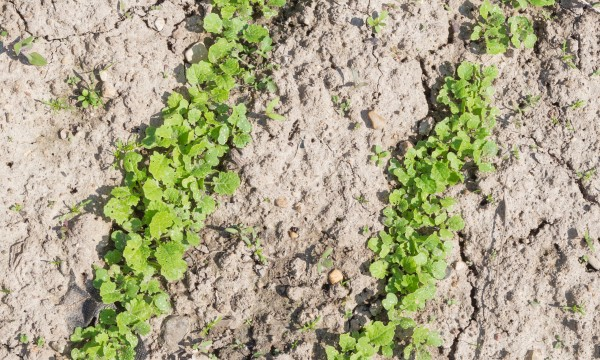 7 Things To Know About Gardening With Clay Soil
