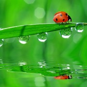 7 ways to maintain your garden with ladybugs and other beneficial insects and critters