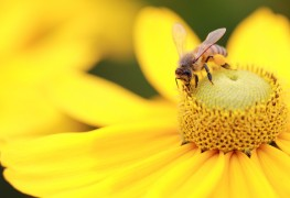 7 ways to maintain your garden with wasps and hornets