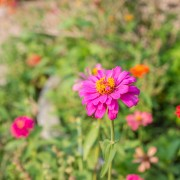 7 ways to make your xeriscape garden a true oasis