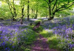 Green gardening: the best varieties of heaths