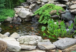 Using plants to filter your natural swimming pool