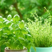 5 fun flavours to add to your herb garden