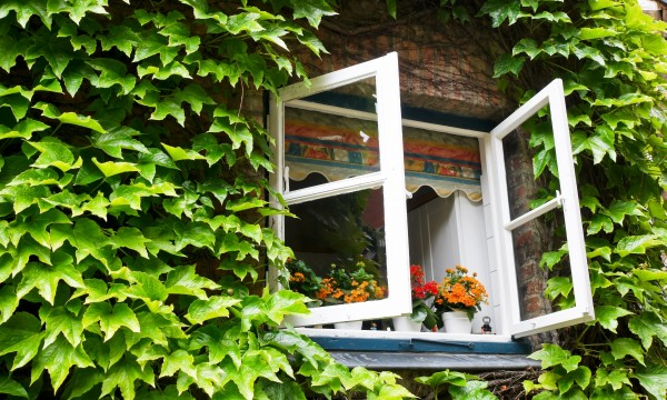 Window basics that can save you time and money