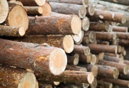 Basic tips for turning trees into lumber