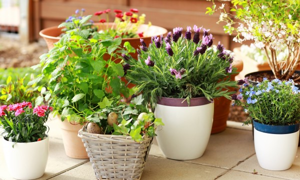 8 hints for caring for container plants