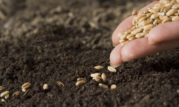 9 Tips For Successfully Sowing Seeds In The Spring Garden Smart Tips