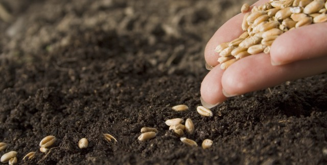 9 tips for successfully sowing seeds in the spring garden