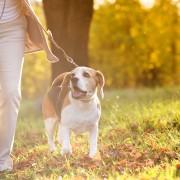 8 neighbourhood activities to get you moving