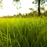 The 4 rules for a healthier, greener lawn