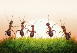 Home remedies to get rid of insects and mice
