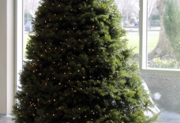 Buying a Christmas tree: pros and cons of real vs. fake