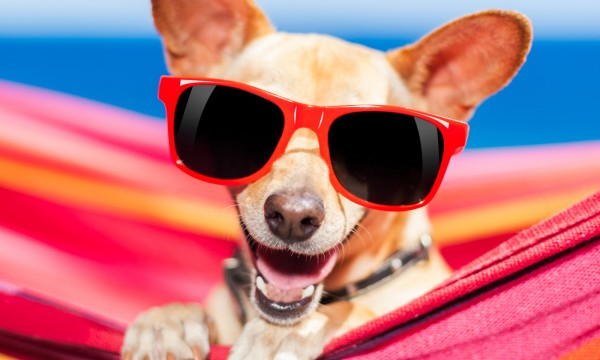 Hints to make travelling with your pet easy as child's play