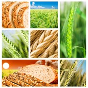 Balancing your carbohydrates to maximize body function