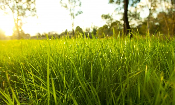 9 pointers for evaluating and repairing a troubled lawn