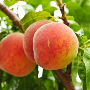Fight high blood pressure with this peach soup