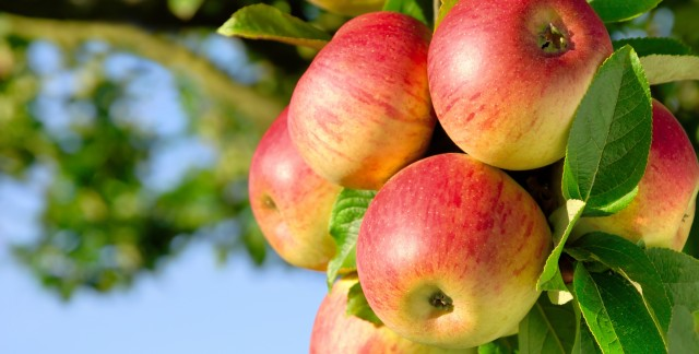 Expert tips for growing apple trees