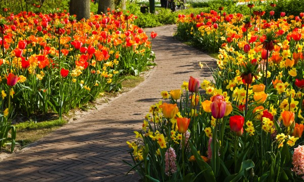 How to care for your bulbs after planting