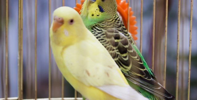 3 things to consider before buying a bird cage