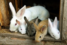 A beginners' guide to caring for pet rabbits