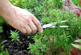 Smart advice for siting and planting a herb garden