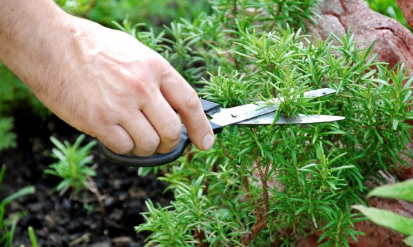 How to propagate and groom your plants