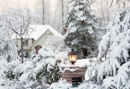 Willing winter bloomers to consider beyond evergreens
