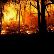 How to protect your home from bushfires