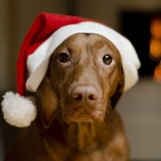 4 ways to include your pets in Christmas fun