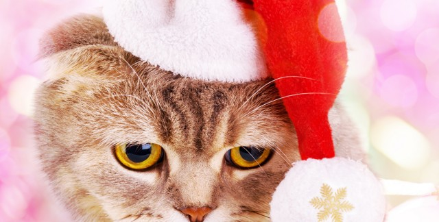 4 tips for hosting a fun holiday party for your pet
