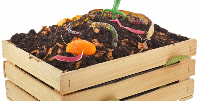 Wondrous worms: dos and don'ts of great vermicomposting