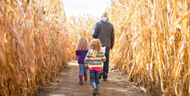 13 corn mazes to explore in Toronto and the GTA
