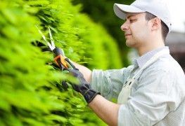 Do it now or later? The best time to trim your garden hedge
