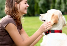 10 signs your dog might be diabetic