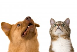 Helpful tips on moving with pets