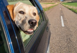 How to ensure a smooth road trip with your pet