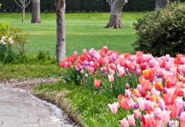 Dos, don'ts and 6 tips for planting bulbs