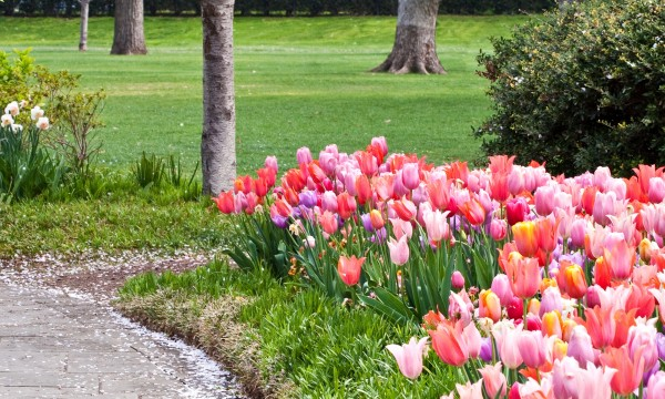 Dos, don'ts and tips for planting bulbs