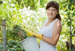Care-free annuals: Gomphrena