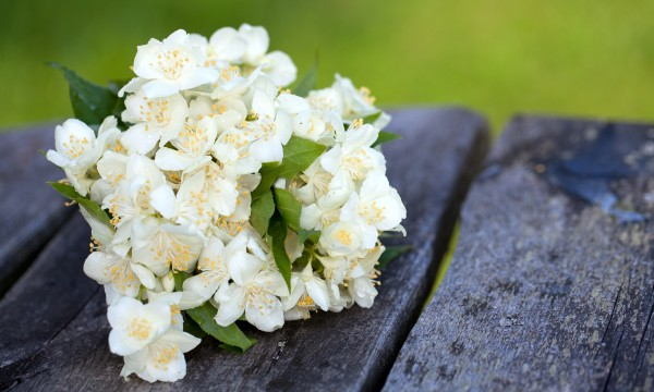 10 popular flowers and the feelings they express