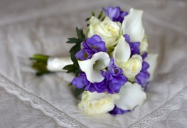 A growing guide for Freesia flowers