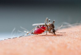 How to prevent and treat West Nile virus
