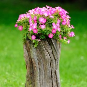 8 ideas for gardening around stumps and dead wood