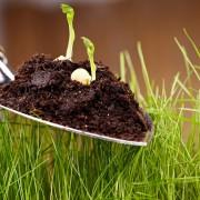 Care-free annuals: Growing lantana