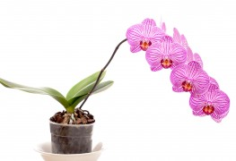 Growing indoor-outdoor plants: palms and orchids