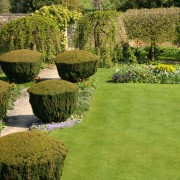 Hedges and trees: 8 ideas for practical planting