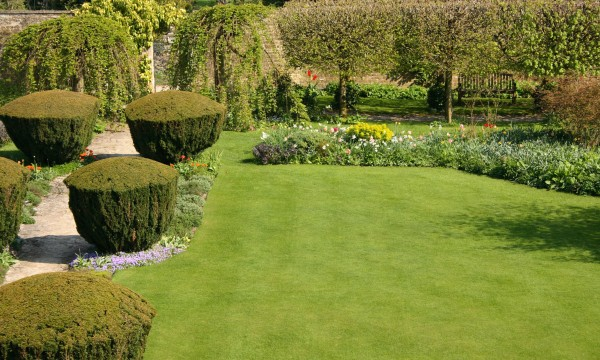 Hedges and trees: 8 ideas for practical planting | Smart Tips