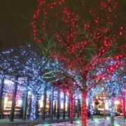 12 free holiday season events in Toronto